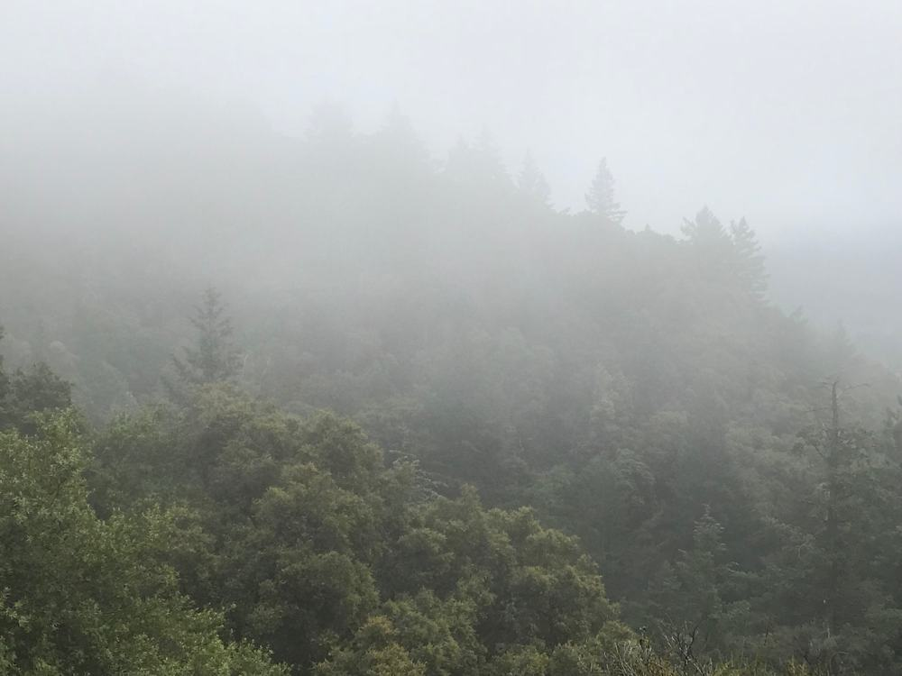 Low clouds hug the treetops at Castle Rock State Park.