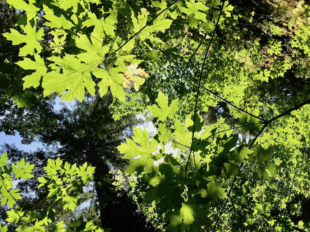 Shades of green at Nisene Marks Forest SP