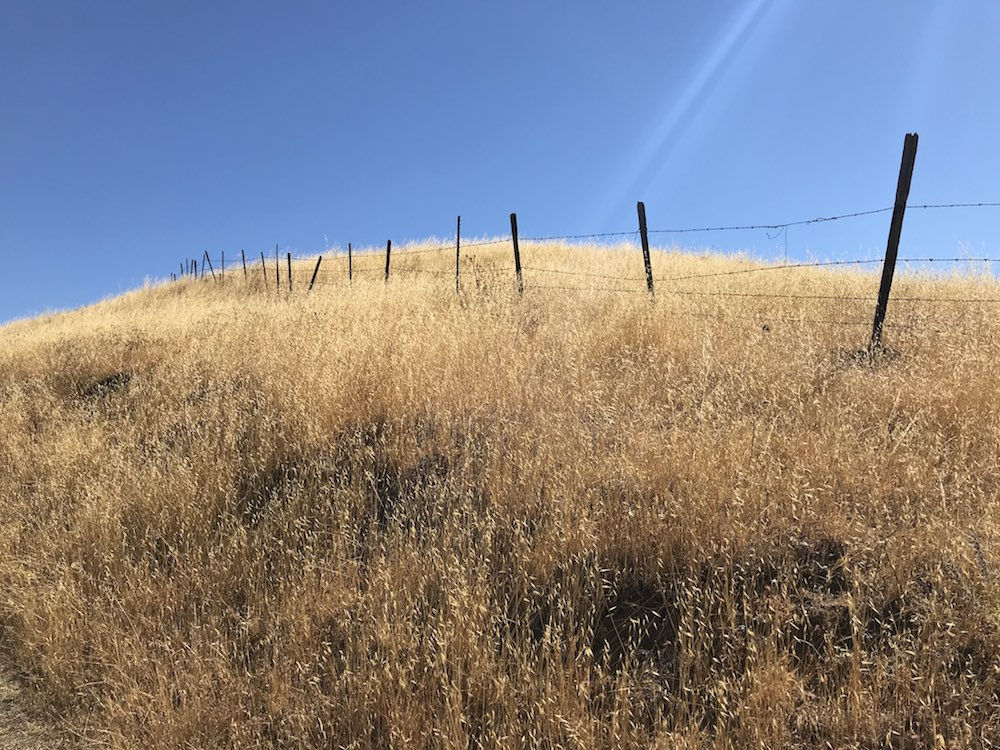 Old fence between yellow grass and clear blue sky