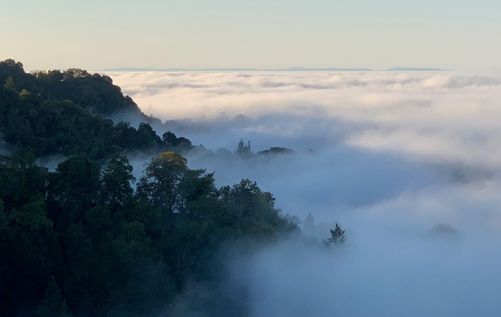 Mist creeps over the landscape in the Santa Cruz Mountains.