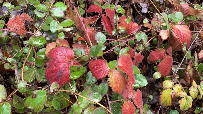 poison oak was common in the shade