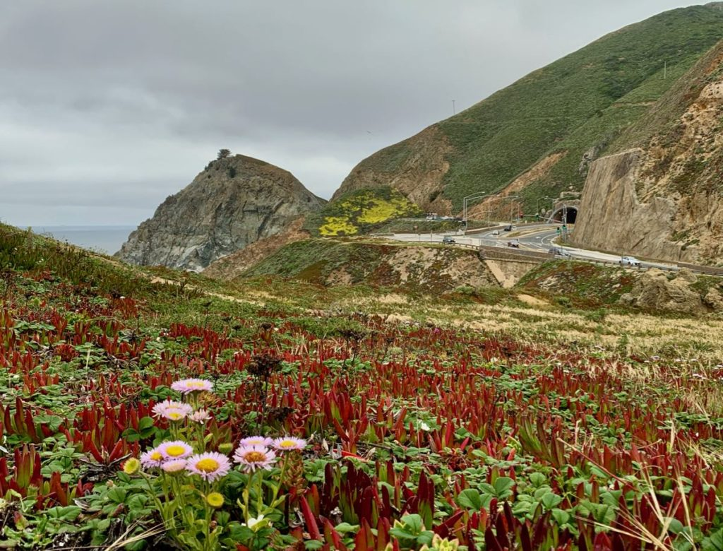 Wildflowers with an ocean view