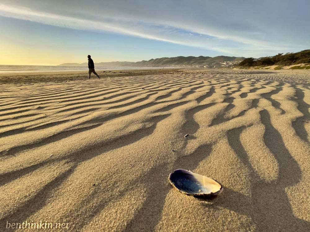 Person walking on a beach with wind ripples and a shell.